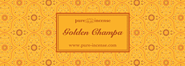(PI) Abs Golden Champa