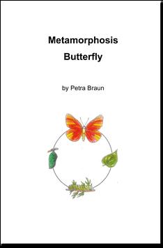 BM108e: Metamorphosis Butterfly