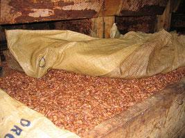 カカオ豆の醗酵