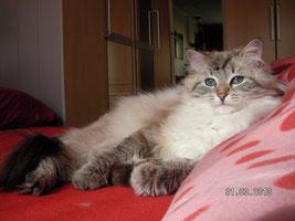 Tissy, die wunderschöne Mutter - Bild zum vergrößern anklicken