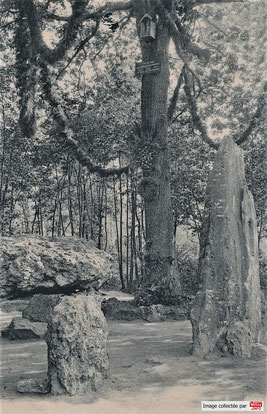 Une statuette de la Vierge était placé en hauteur sur le chêne.