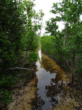 Trail oder Wasserweg?