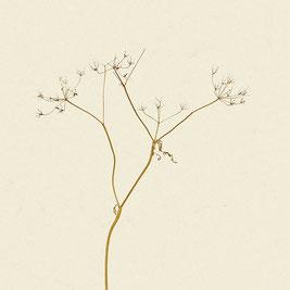 Pflanze (#19), Pigmentdruck auf Hahnemühle Photo Rag 308 g/m²