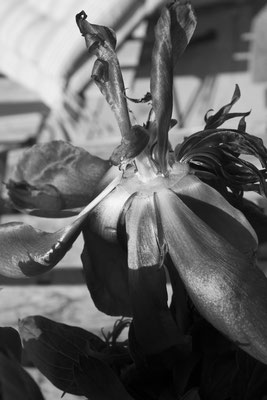 Exploring ZAHA Hadid 13 Flowers