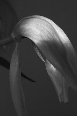 Exploring ZAHA Hadid 6 Flowers
