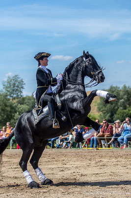 Steigendes Pferd, Rappe, Pferd steigt