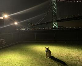 照明も完備で夜まで遊べます