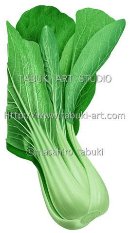 RD3201青梗菜 チンゲンサイ