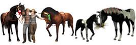 Header Rund um Pferde