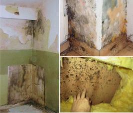 Schimmelbefall in Wohnräumen