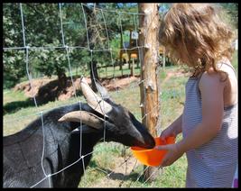 Animations en été : repas champêtre avec traiteur fermier, balade en tracteur remorque, lecture de paysage, mini ferme, sorties botaniques, spectacle chien de berger