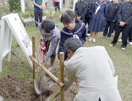 宇宙桜を記念植樹する石垣校長と高宮さん、宮地所長=14日午後、名蔵小中学校