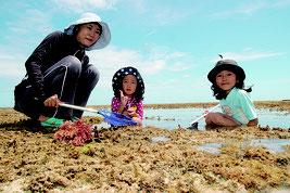 潮干狩りを楽しむ下瀬さん親子=8日午後、市内多田浜海岸の浜辺から約300㍍沖