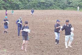 ひまわりの種をまく参加者ら=23日午前、石垣市川平地区