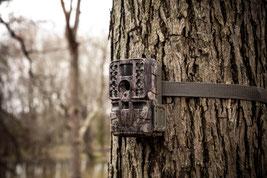Piège photo installé sur un arbre.