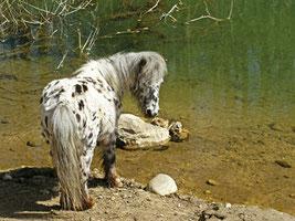 Moritz am Teich