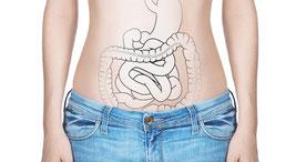 Magen-Darm-Trakt, Darmrohr, Darmflora, untersuchen