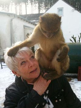 Affen streicheln und füttern