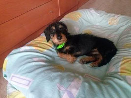 Popeye adoptado!
