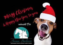 Anima-Balance | TCM für Tiere | Tiertherapie für Pferde, Hunde & Katzen | Organetik.SL