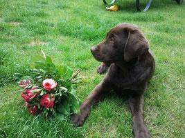 Josie mit Blumen für Tami