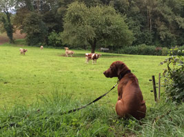 Welpenkurs, Hundetraining, Hundeschule, Butzbach, World of Dogs, Welpenstunde