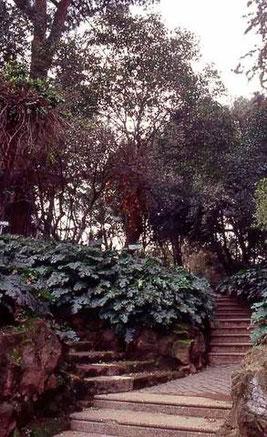 Parco di Villa Mercede, Roma - Foto di Roma Capitale