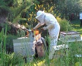 apiculteur gemenos