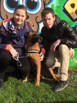 adoption chien de refuge - SPA Bréhand - proche Saint Brieuc - Côtes d'armor - 22 - Bretagne