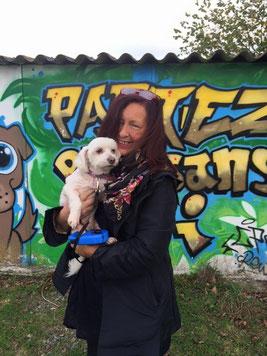 Adoption chien au refuge du Penthièvre - proche ST Brieuc - 22 - Bretagne