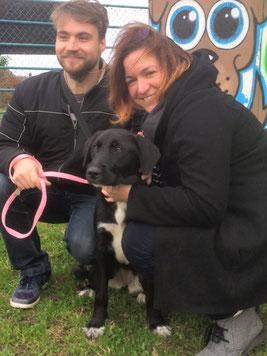 adopter chien de refuge - refuge du Penthièvre - Bretagne