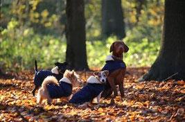 Quatre chiens, un chien de grande taille marron et trois petits chiens portent des manteaux par coach canin 16 éducateur canin en charente