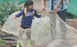 東京都内で農業体験。オーガニックトウモロコシの種まき体験。