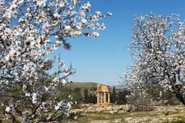 Sagra del mandorlo in Fiore, Agrigento