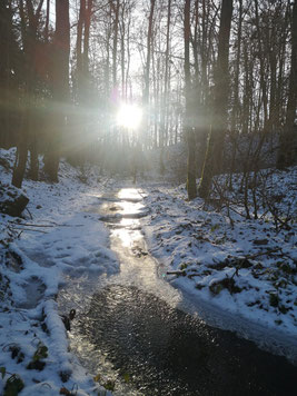 fließendes und gefrorenes Wasser mit Sonnenlicht im Wald