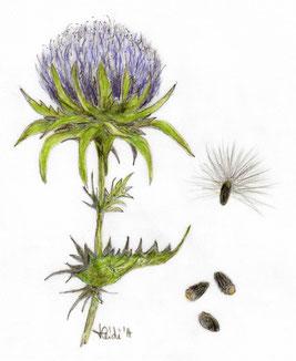Pflanzenheilkunde, Phytotherapie, Bad Salzuflen, Gewürz- und Heilpflanzen, Begleittherapie