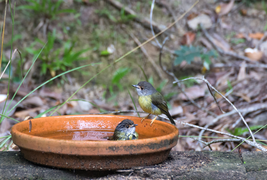 Foto: Vogeltränke