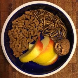 Apfel, Walnuss, Mehlwürmer und Katzenfutter