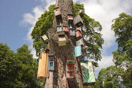 Verkių parko inkilai / Nesting-boxes in Verkių park (photo Gintaras Burba)