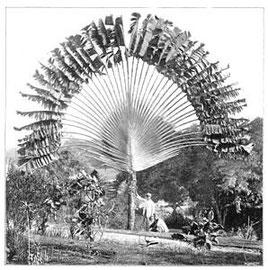 """Ernst Haeckel in Malaysia, das Gebiet, das er in """"Insulinde"""" beschrieben hat"""