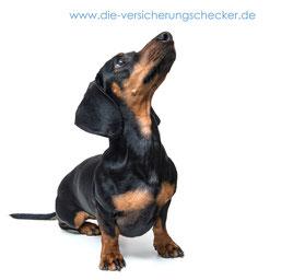 Beste Hundeversicherung von 'Die Versicherungschecker'