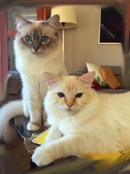 Vincent & Joe