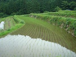 棚田、福岡県