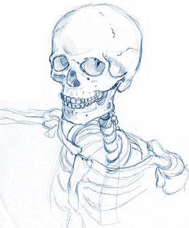 骨年齢とシワ