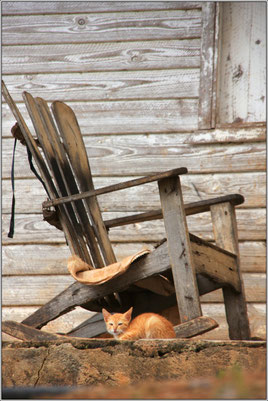 cuba, rocking chair, chaton, Che Guevara, Castro, voyage