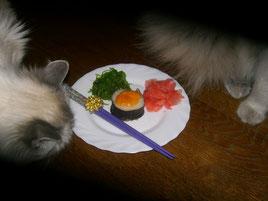 Запеченый ролл. Фото и кошки Елены Люзняк