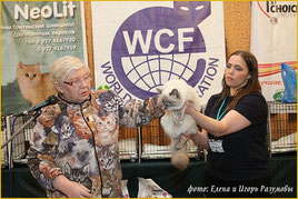 На фото Миронова О.С.  и Кэсси Кошка Моего Сердца ( владелец Зотина Надежда)