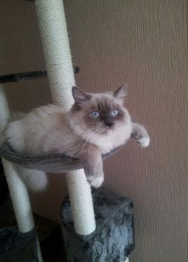 Конни Кошка Моего Сердца