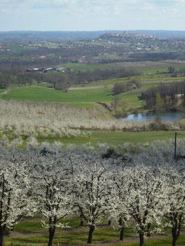 Monflanquin pendant la floraison des pruniers à                  Cailladelles