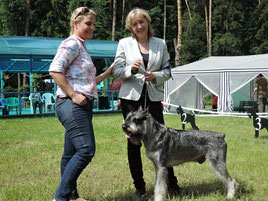 National show of giant schnauzer, 30/05/2015, Russia  GLORIS HARLEY DEVIDSON  - ex. 1 (class CH of NBC), Candidat in ISPU CH  Expert Birgit Bischoff (Germany)